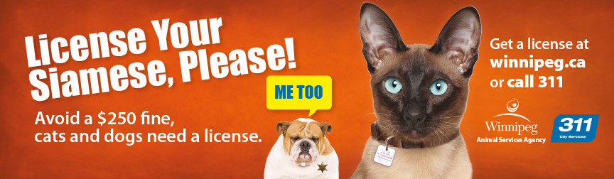 License your siamese, please!
