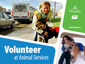 Volunteer with Animal Services image
